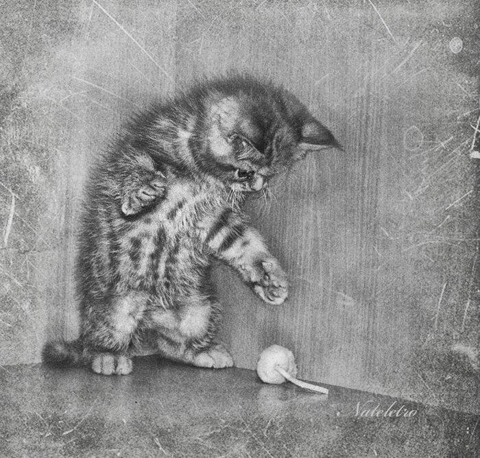 экзотический, котёнок, мышка, игра,, Nateletro