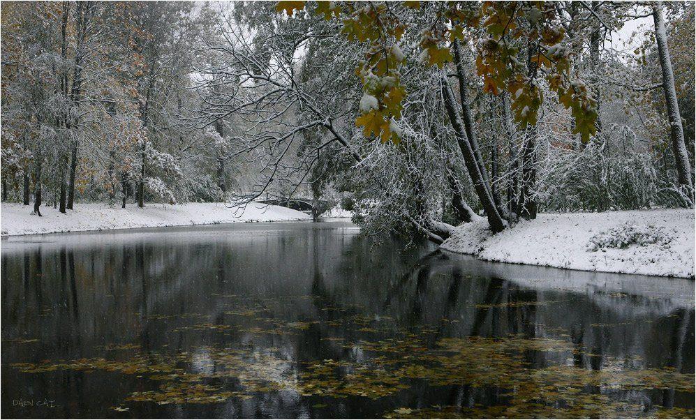 холод, зимний, парк, осень, парк, царское, село, деревья, пруд, листва, Darn Cat
