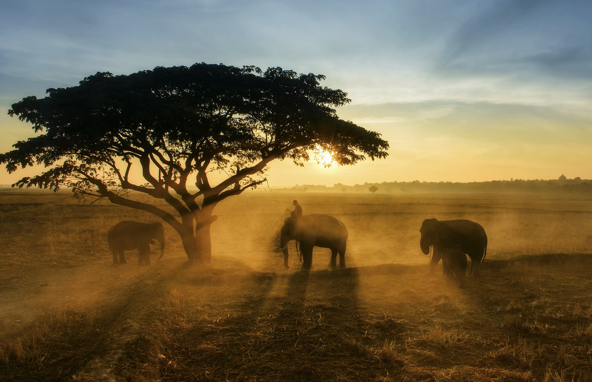 Animals, Asia, Asian, Elephant, Life, Sun, Sunlight, Sunrise, Sunset, Thai, Thailand, Travel, Tree, Wildlife, Saravut Whanset