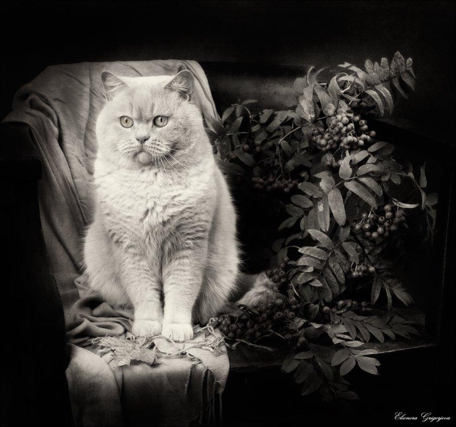 Кот, Натюркотики, Осень, Ретро, Рябина, Eleonora Grigorjeva