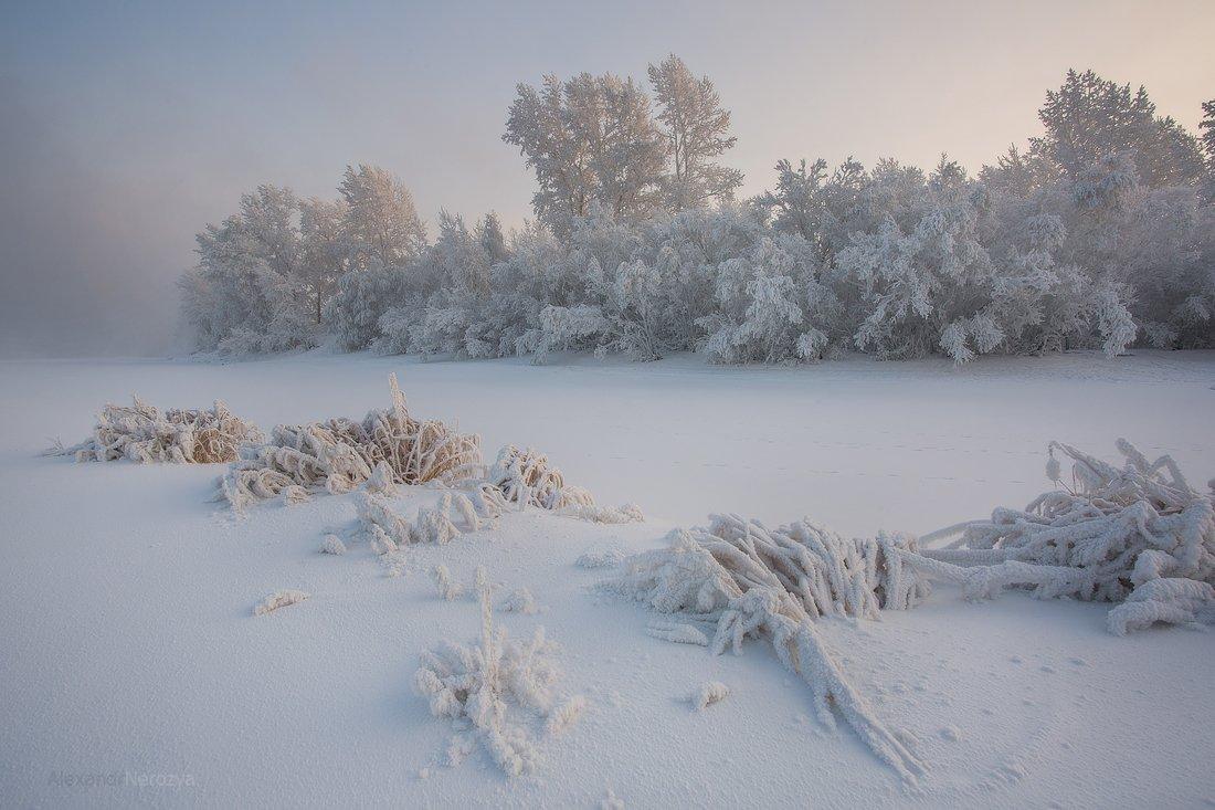 лес, поле, мороз, иней, снег, сибирь, нерозя, красноярск, береза, пейзаж, зима, енисей, Александр 'Horimono' Нерозя