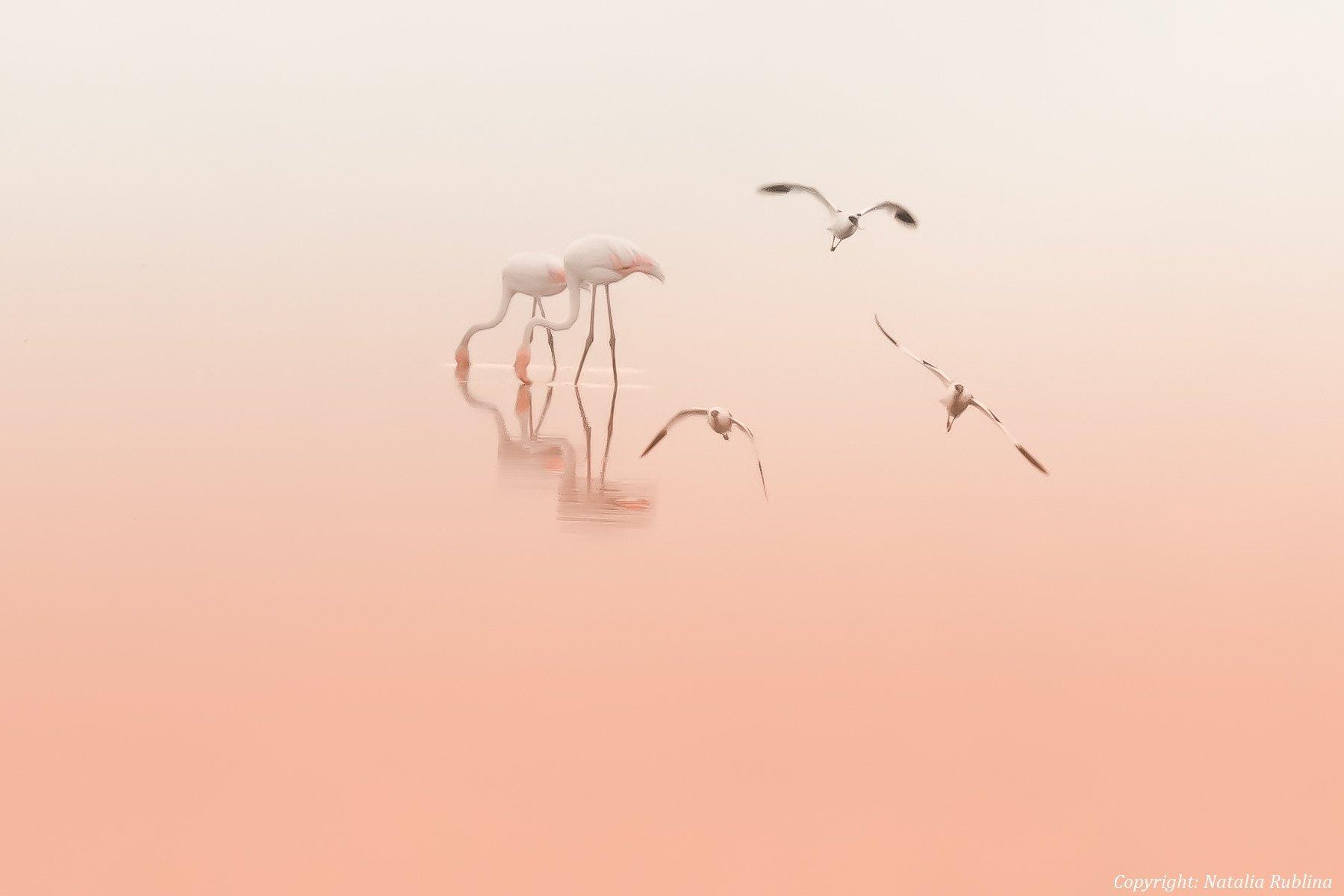 настроение, озеро, природа, птицы, рассвет, розовый рассвет, романтика, спокойствие, тишина, утро, фламинго, Наталья Рублина