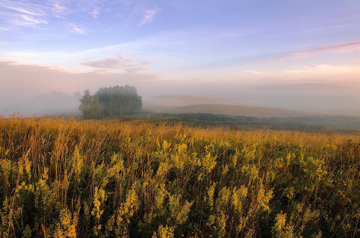Autumn, Fog, Meadow, Mist, Morning, Justinas Kondrotas