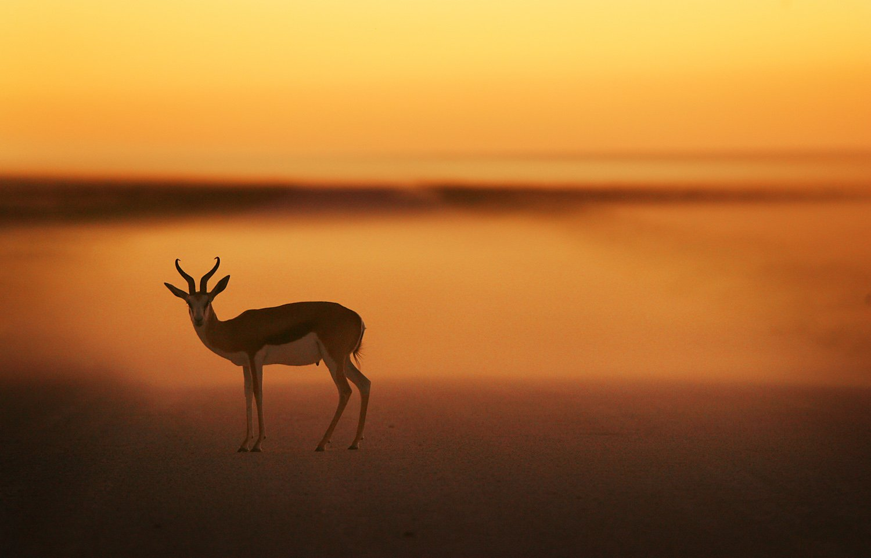 Etosha, Namibia, Nature, Sunset, Wildlife, Дикая природа, Закат, Намибия, Этоша, Алексей Бушов