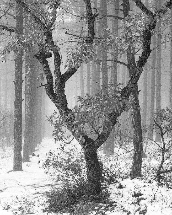 120, 6x7, bw, pentax, film, snow, russia, crimea, mediumformat, travel, fog, mist, forest,tree россия, пленка, чб, туман, лес, дерево, Владимир Вялов