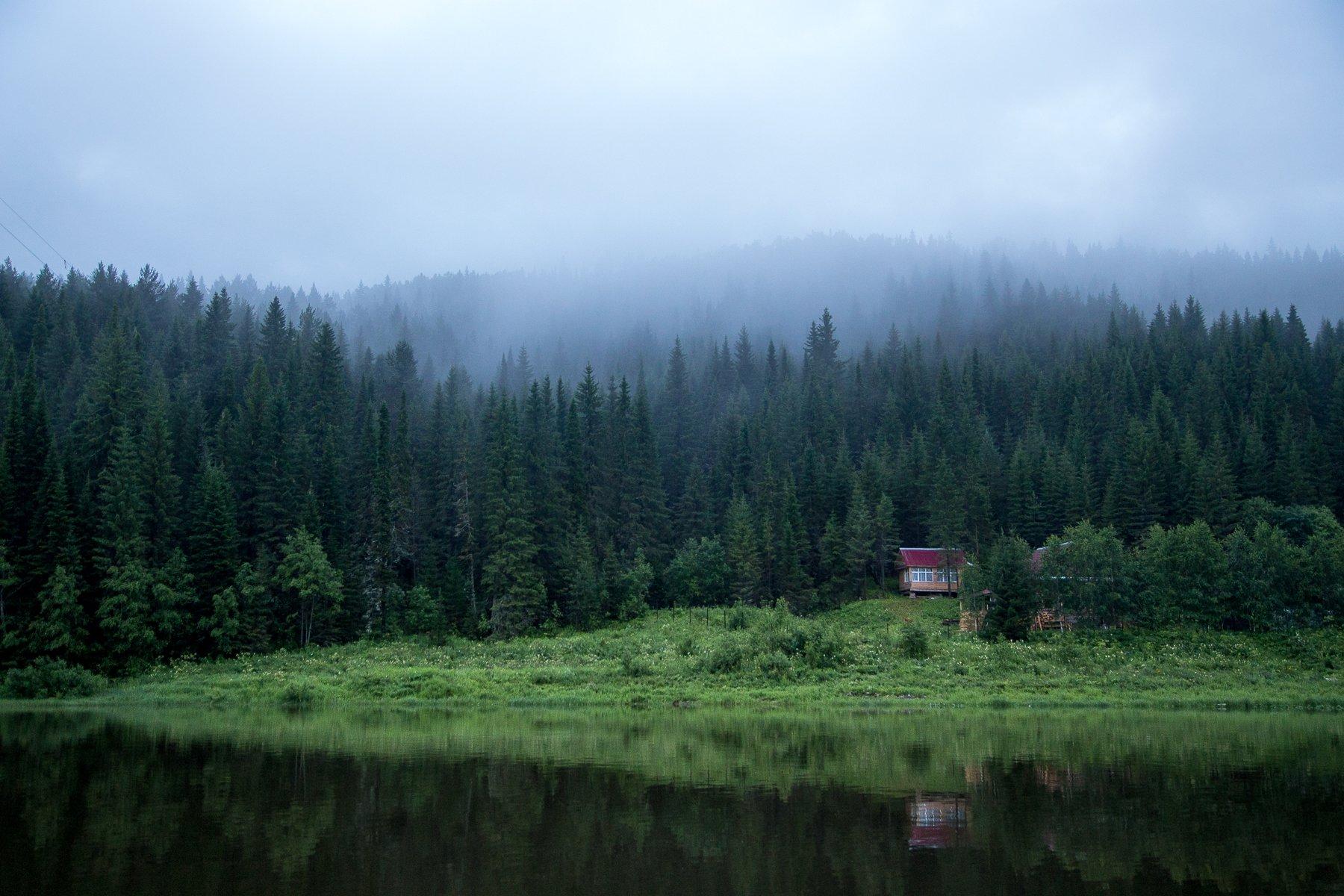 туман, лес, река, домик, Савицкий Ян