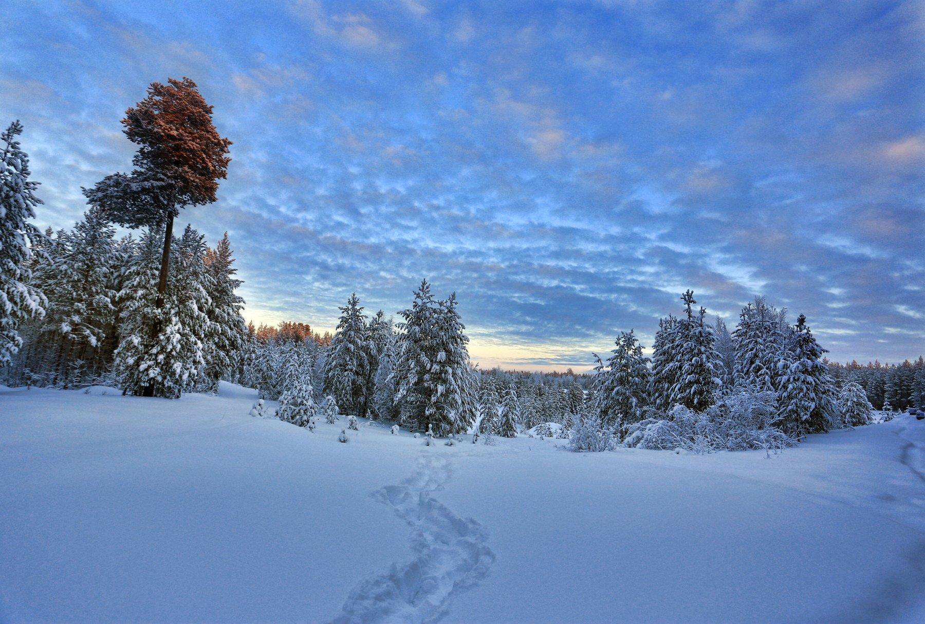 Закат, Небо, Север, Снег, Татьяна