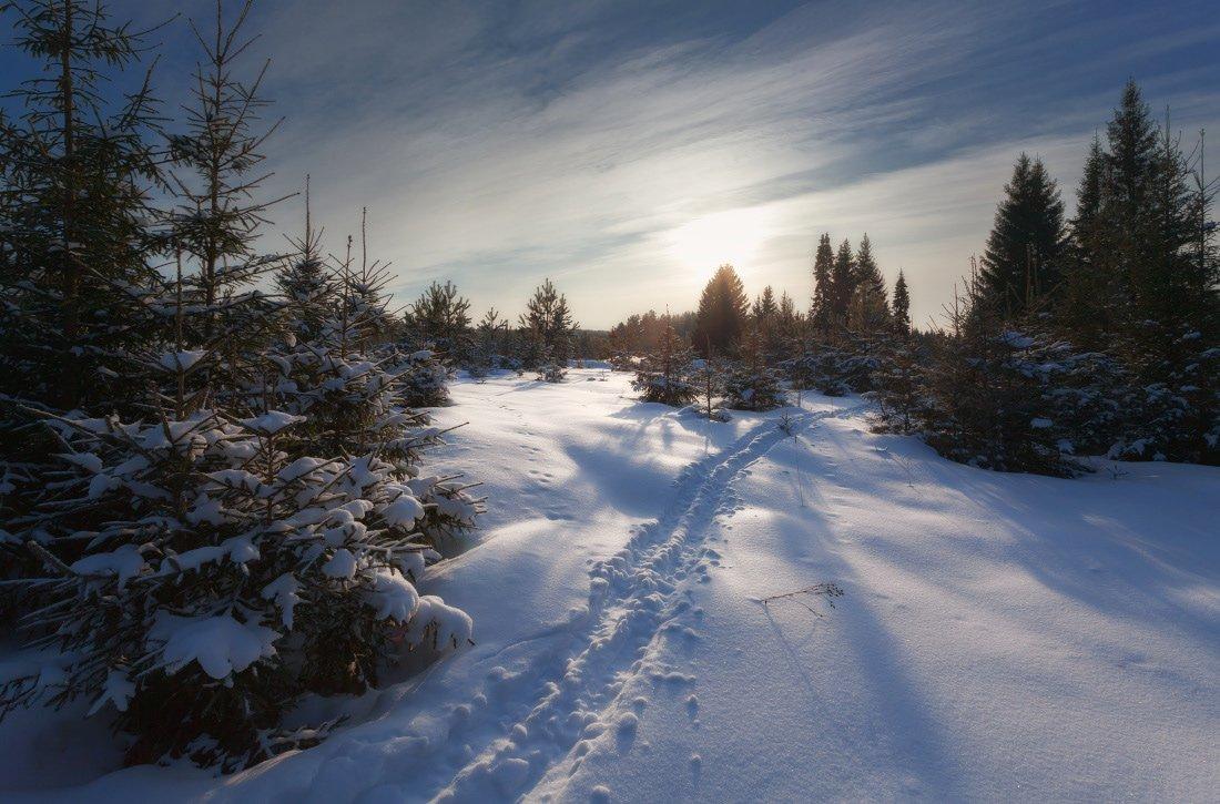 Снег сугробы колея елки лес вечер облака зима мороз, Георгий Машковцев