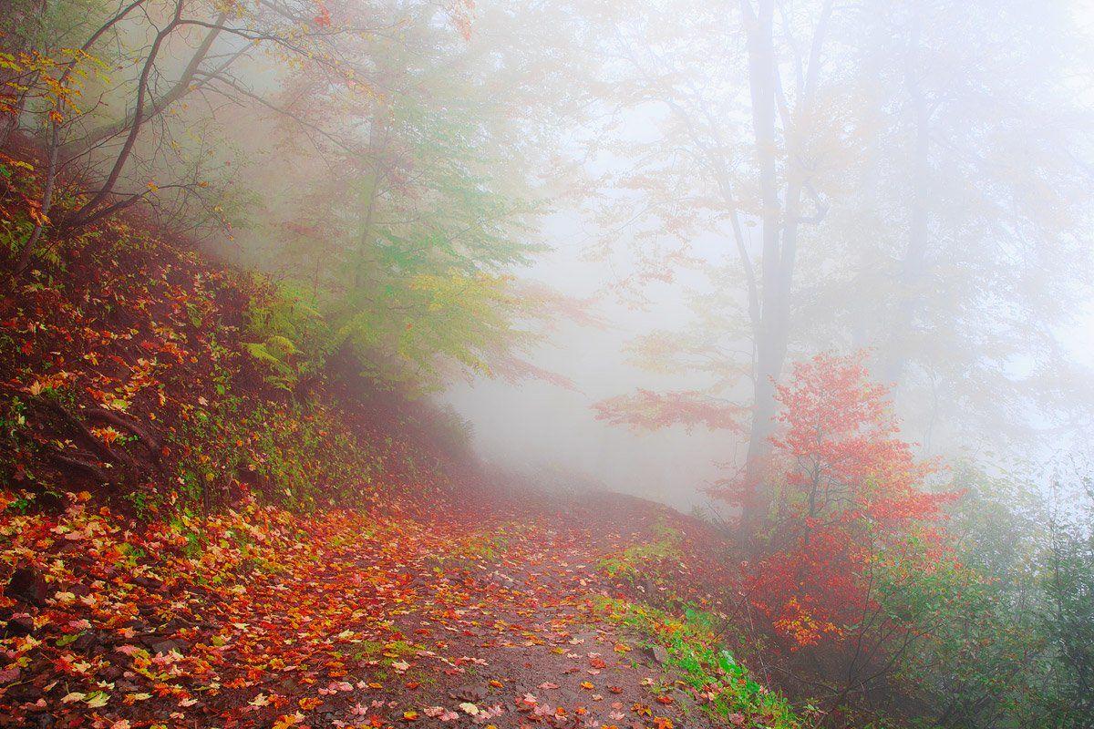 казка, ліс, Виталий Ра
