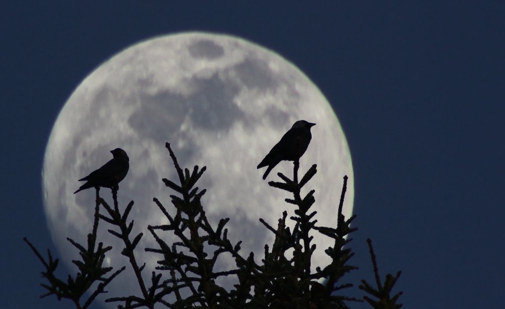 ночь, луна, птицы, moon, bird, birds,, Георги Славов