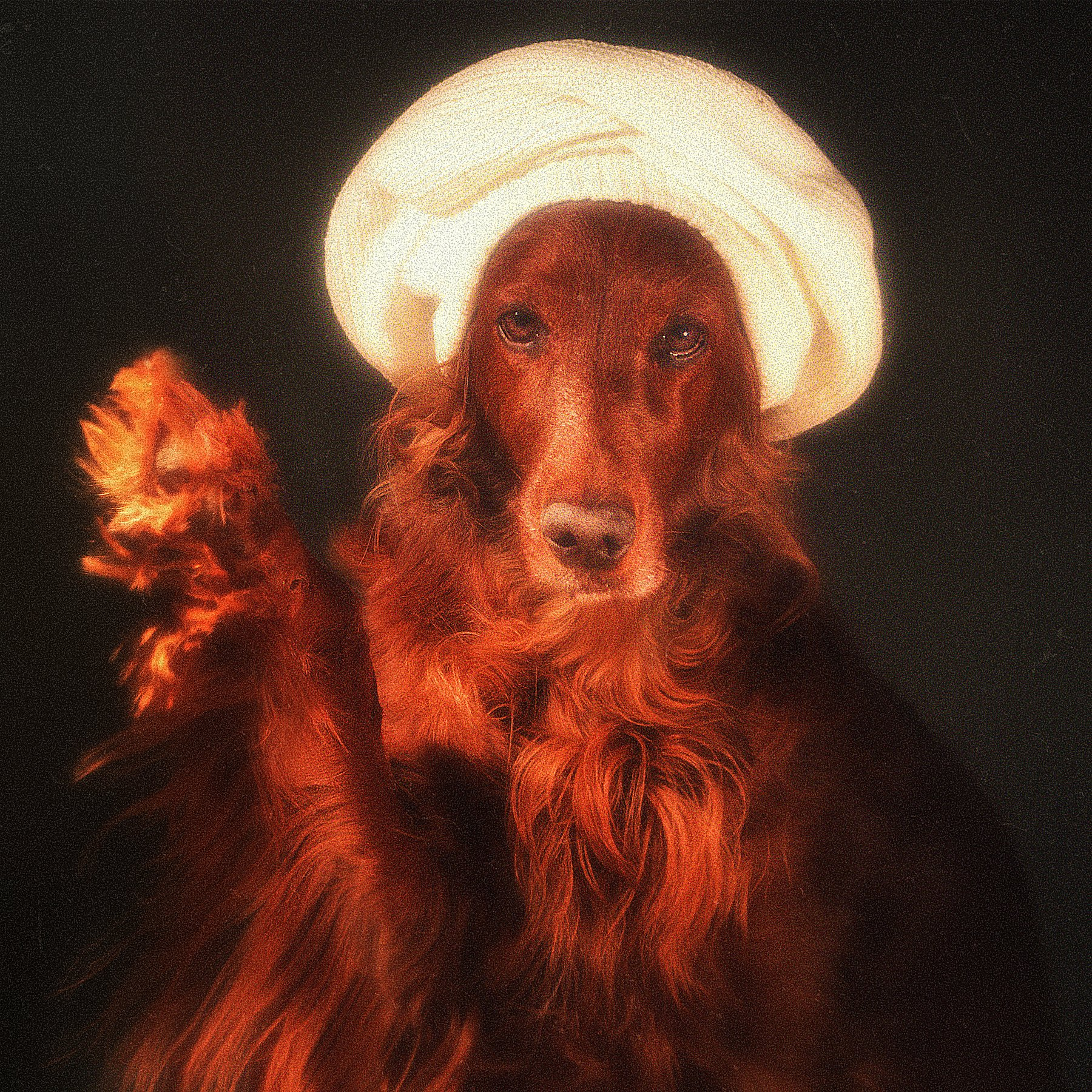 собака, сеттер, арт, портрет, взгляд, картина, , Константин