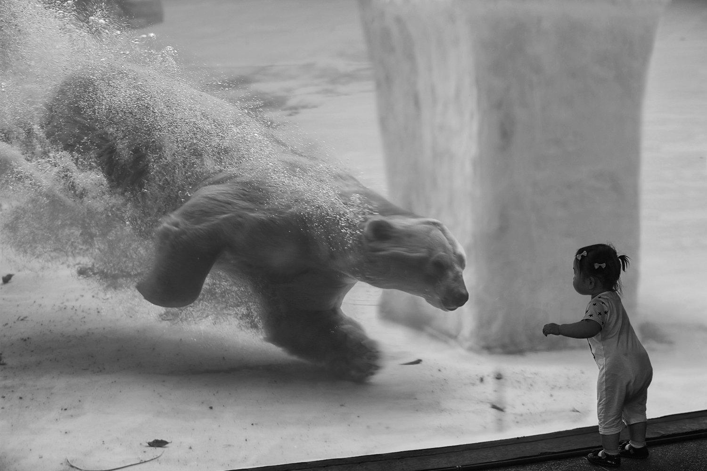 аквапарк, аквариум, белый медведь, водапузыри, девочка, полярный медведь, ребёнок, сингапур, скорость, Алла Соколова