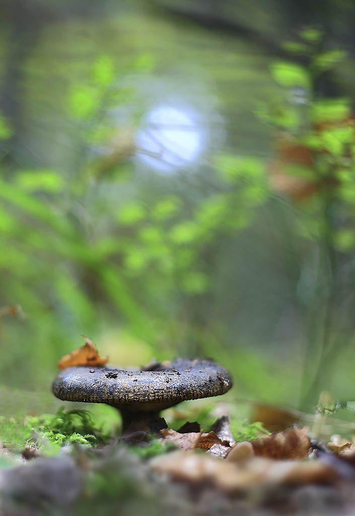 гриб,лягушонок,коричневый, одинарный, толстые,ноги, молодое,растение, макро, трава, мох, почвы, зеленые, желтые, листья, ветки, осень,лес, пейзаж, природа,разноцветные,торфяно-болотные,иглы, продукты питания, семена,, Виктор