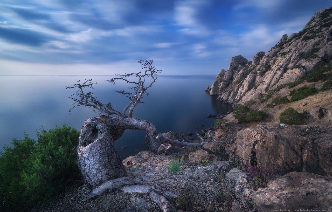 пейзаж, крым, ночь, луна, горы, дерево, скалы, море, облака, небо, ночной пейзаж, новый свет, Денис Белицкий