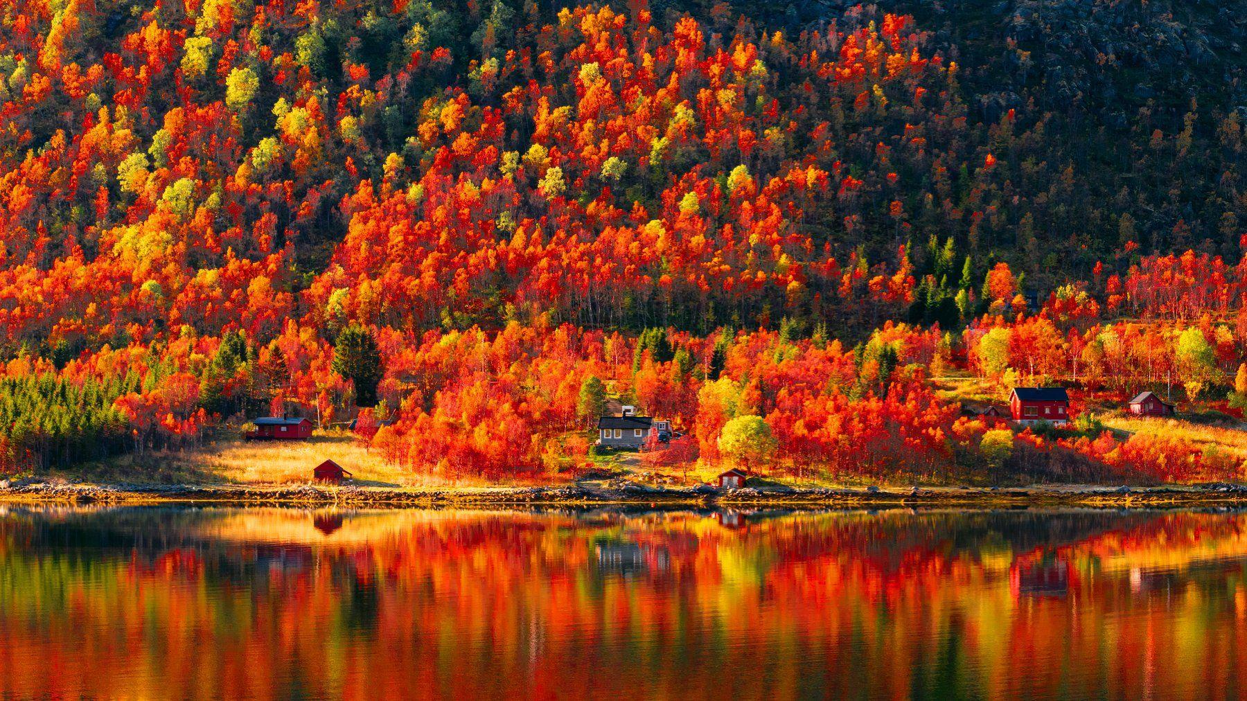 природа,осень,гора,лес,вода,отражение, Пётр Перепеченко