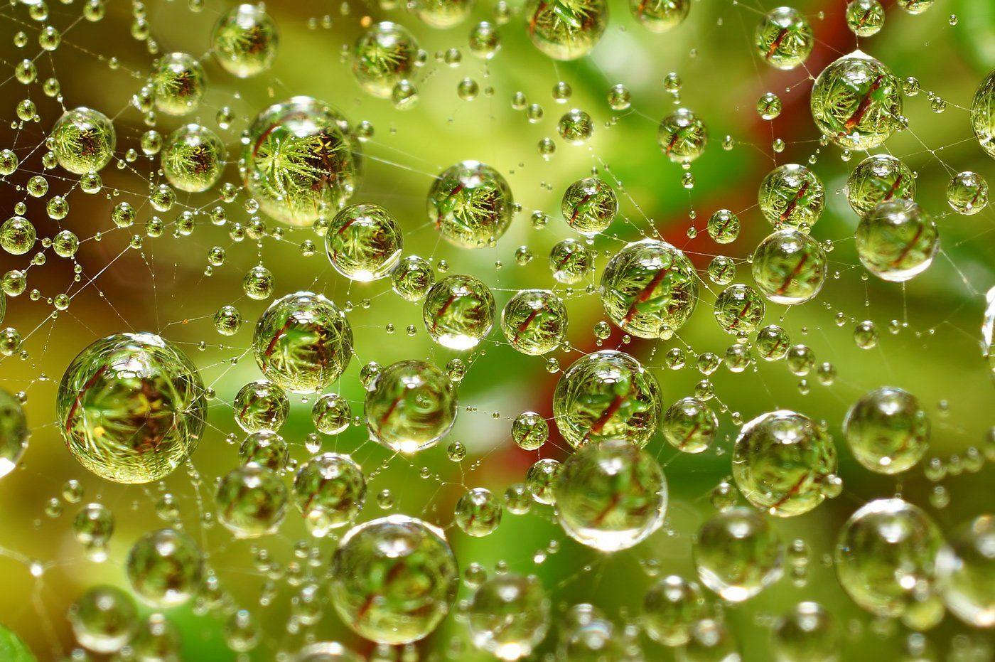 3d, вода, дождь, капли, коми, макро, печора,паутина, Игорь Подобаев