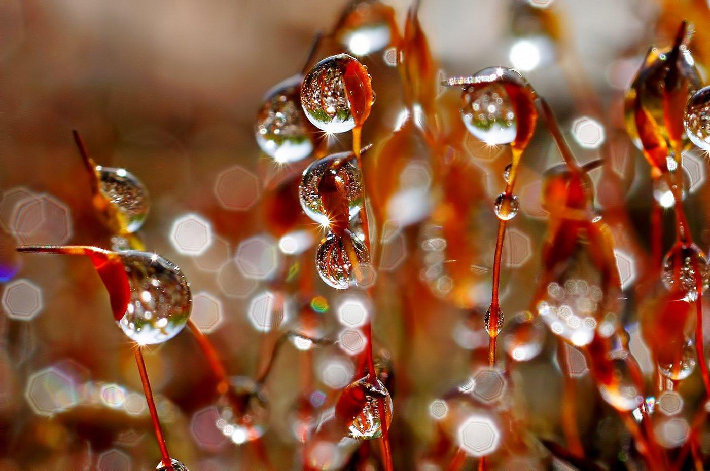 дождь, капли, макро,печора,коми,кукушкин,лен, Игорь Подобаев