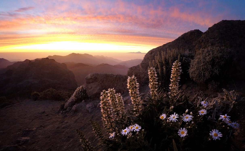 Гран канария, Закат, Канарские острова, Солнце, Цветы, Vitalijus Serioginas