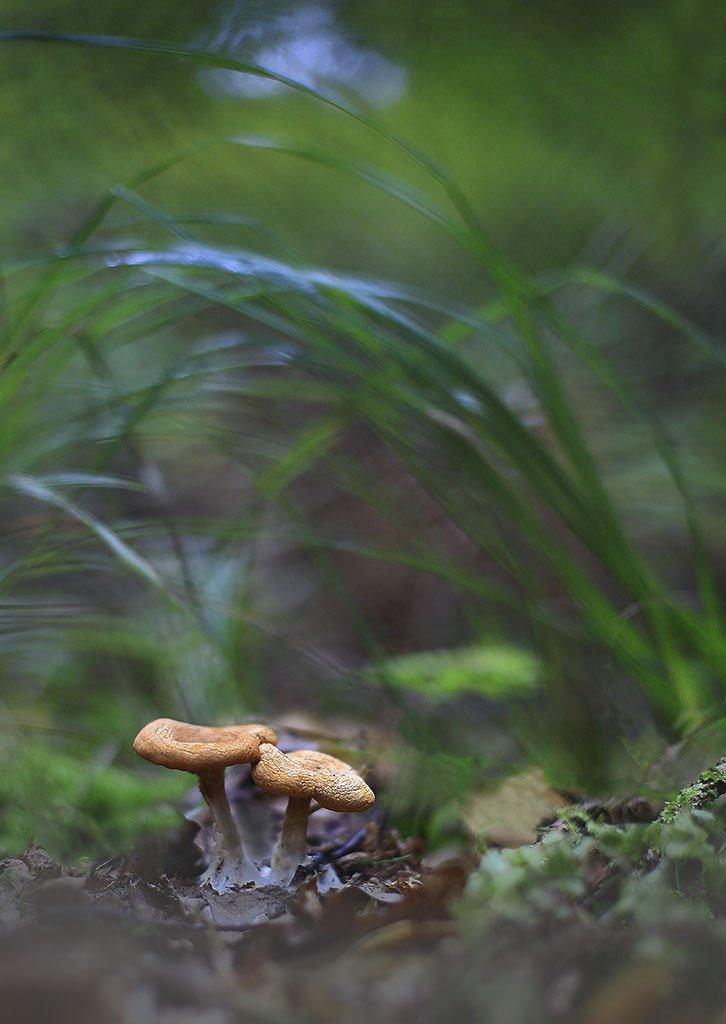 гриб,коричневый,старый,растение, макро, трава, мох, почва, зеленые, желтые, листья, ветки, осень,лес, пейзаж, природа,разноцветные,торфяно-болотные семян;, Виктор