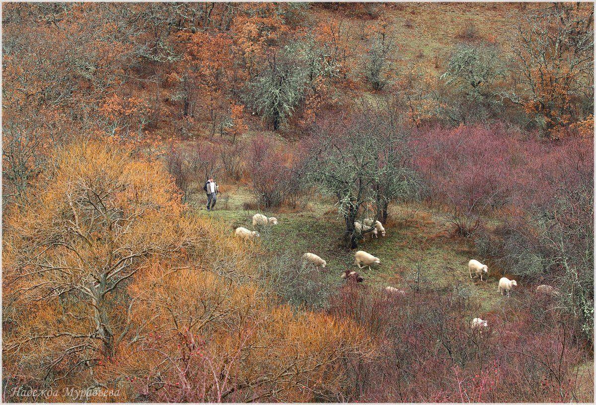 зима, крым, пастух, стадо, Надежда Муравьёва