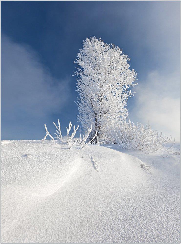 мороз, и, солнце, день, чудесный, izh Diletant (Валерий Щербина)