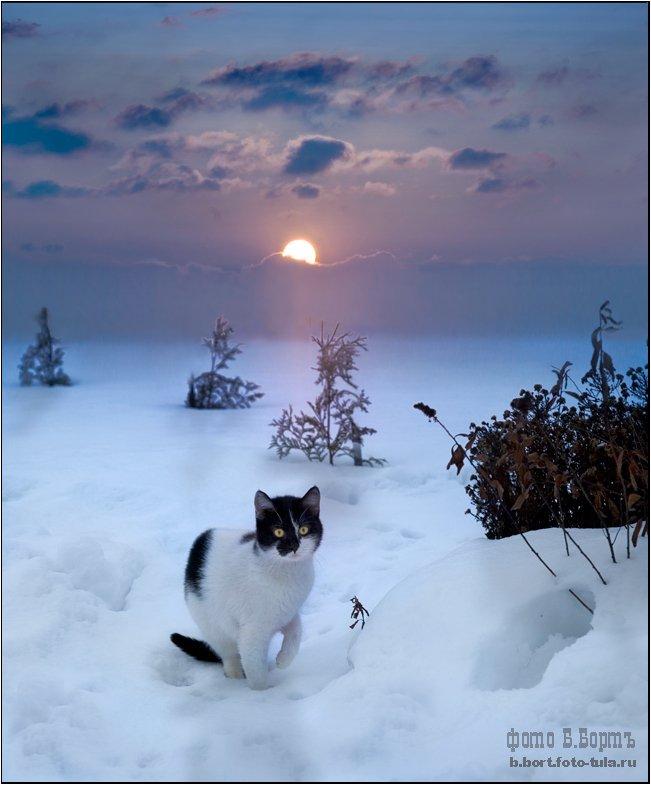 кошка, муся, снег, , , мороз, Boris Bort