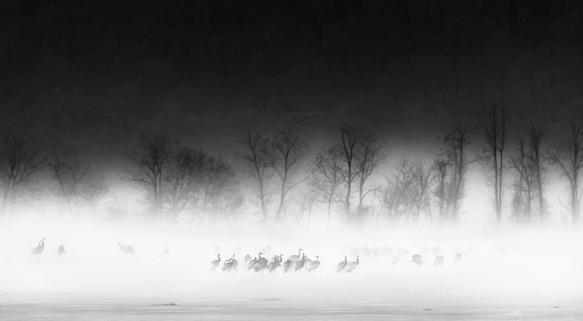 Fog, White-naped crane, KIM SUK EUN