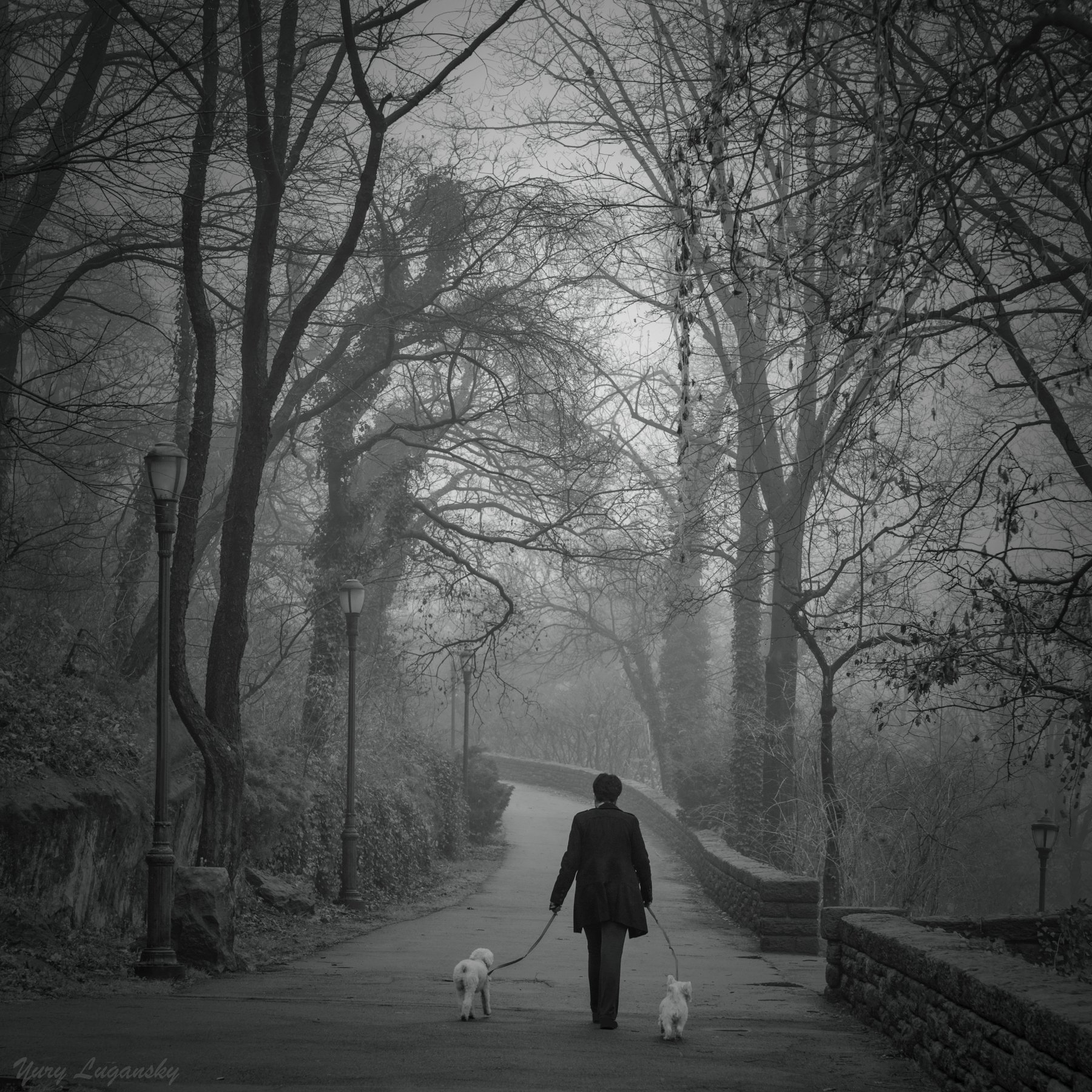 Lady  Dogs park fog, Yury Lugansky