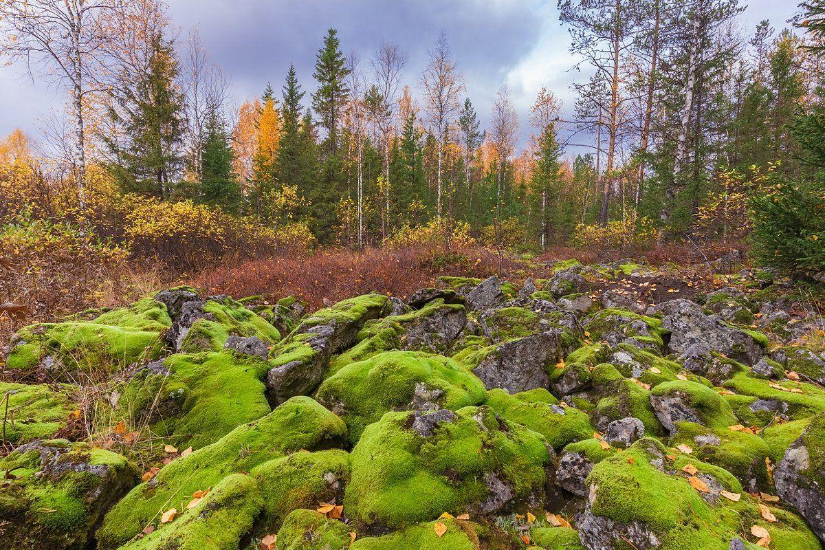 Гух, Камни, Курумник, Мох, Осень, Север, Урал, Кирилл Уютнов