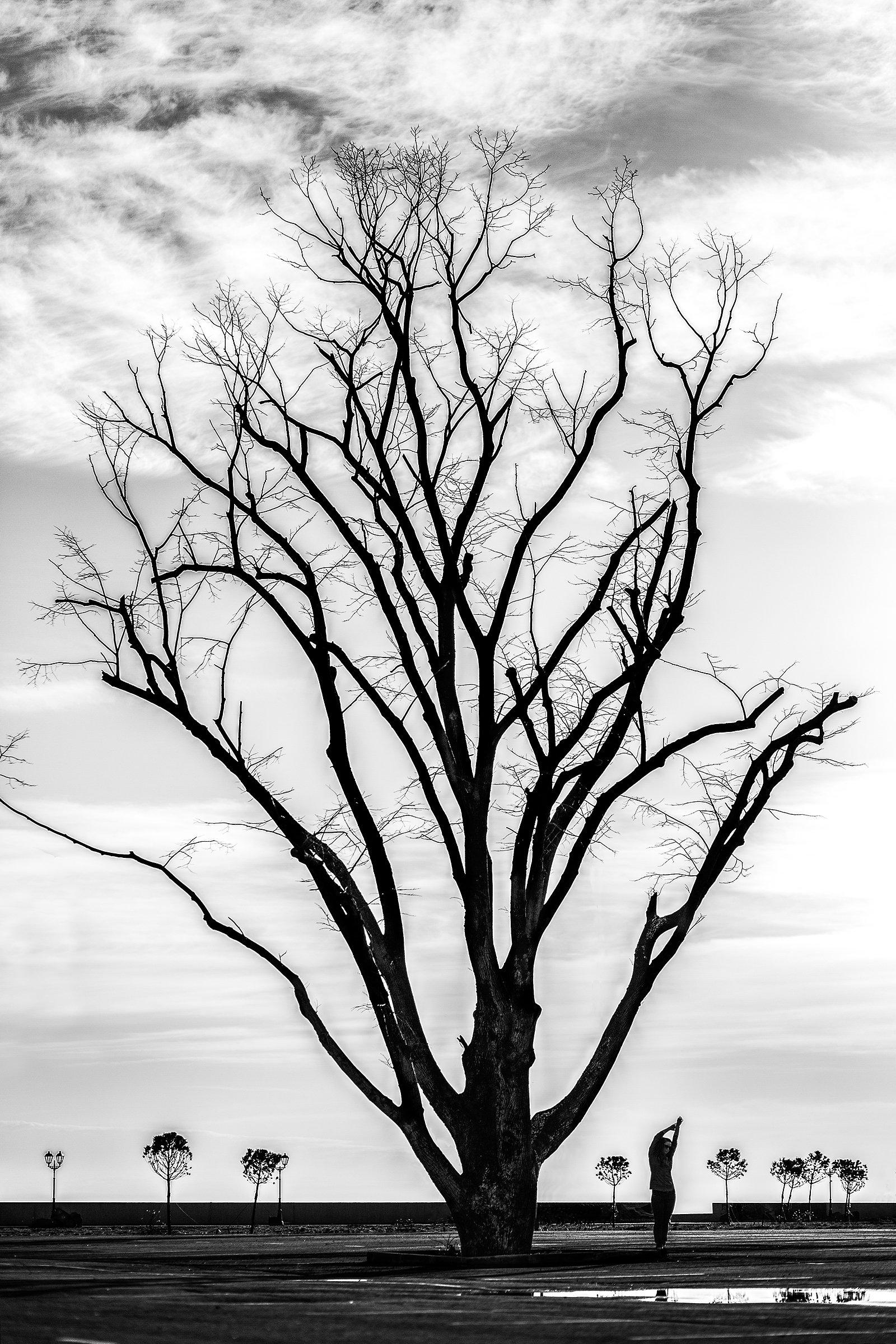 дерево, старое, девушка, Дмитрий Лопатин