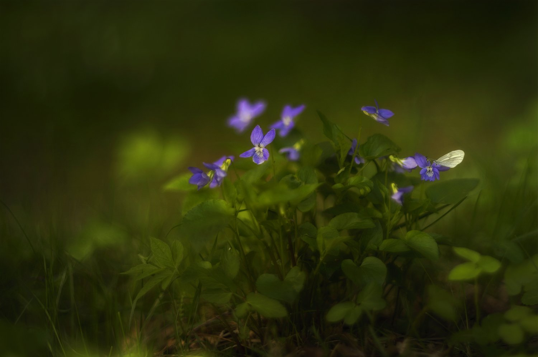 Весна, Лес, Природа, Флора, Цветы, Таня She (Aiya)