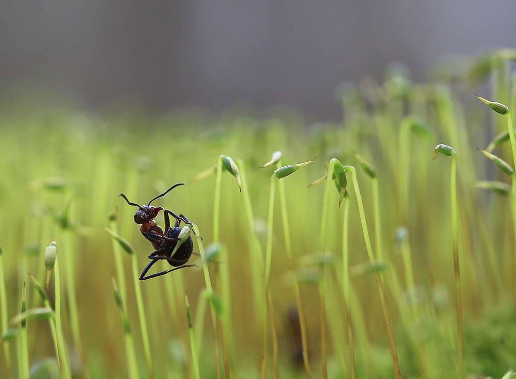 Муравей, Биология, животные, Классификация, лесное хозяйство, насекомые, Наука, окружающая среда, природа, Цвет, Экология, типы, жить, жизнь, красивая, крупным планом, макро -, микроскопические, надзору, сфере, Виктор