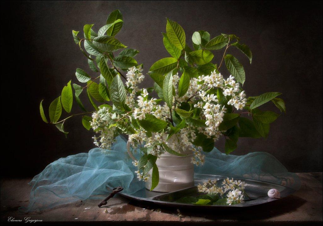Белый цвет, Весна, Натюрморт, Черёмуха, Eleonora Grigorjeva