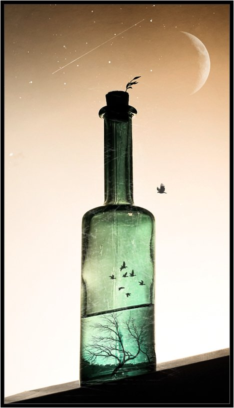 ночь,бутылка,бутылки,птица,птицы,луна,звёзды,падающие звёзды,натюрморт,владимир,шипулин, Vladim_Shipulin
