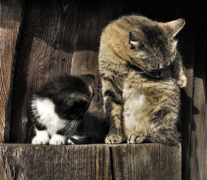 кошка, котёнок, животные, прошлое лето