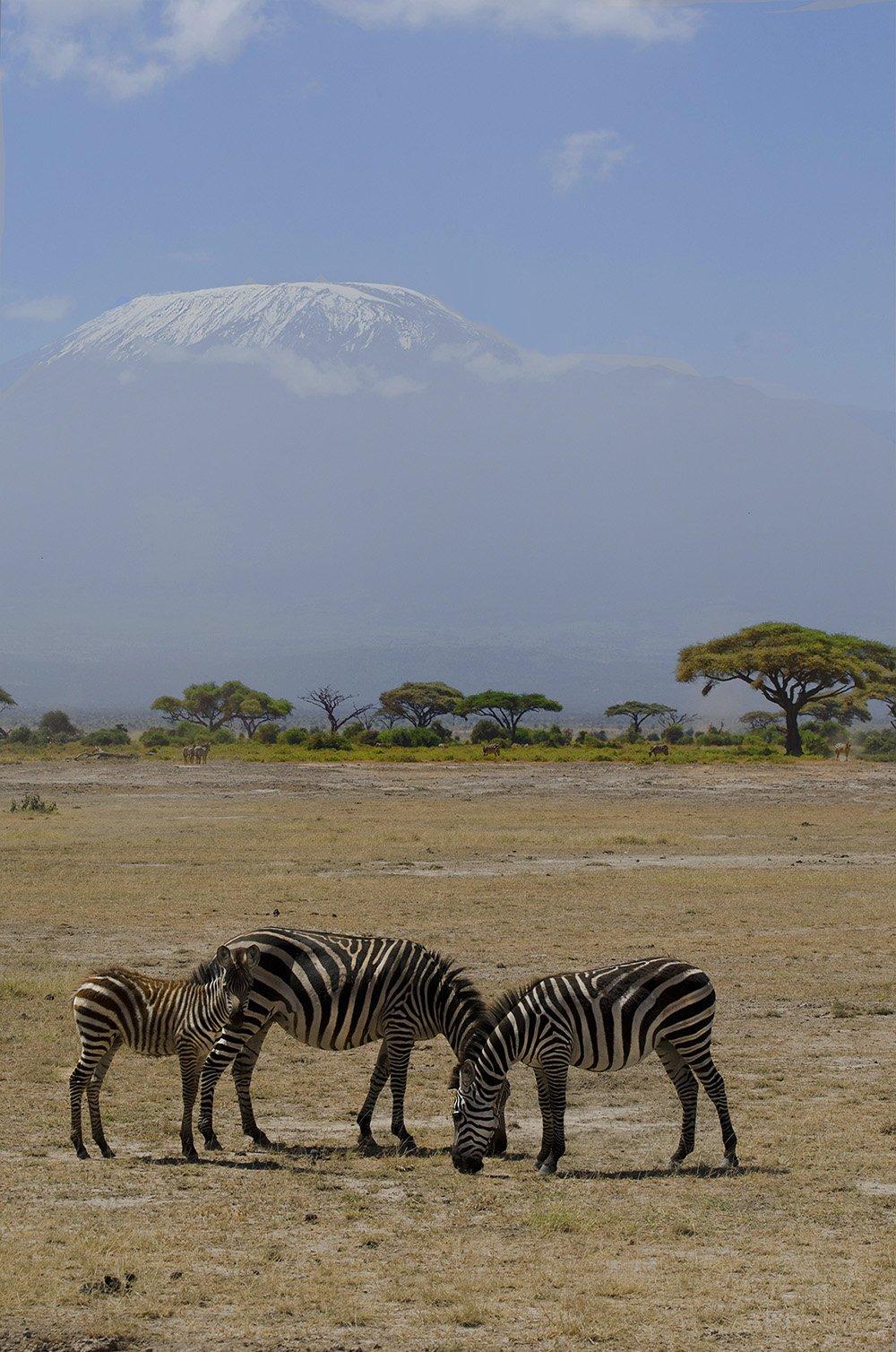 Зебры, Килиманджаро, саванна, сафари, Кения, Марина Мудрова