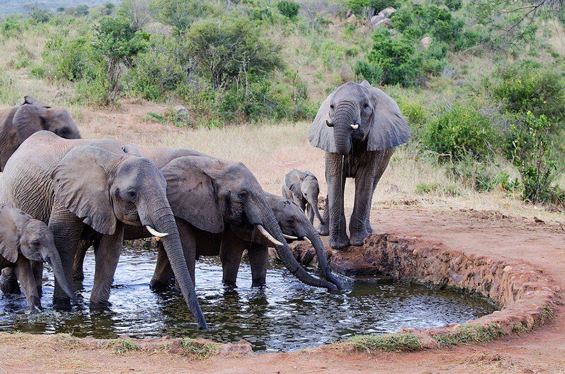 Слоны, саванна, сафари, африка, кения, Марина Мудрова