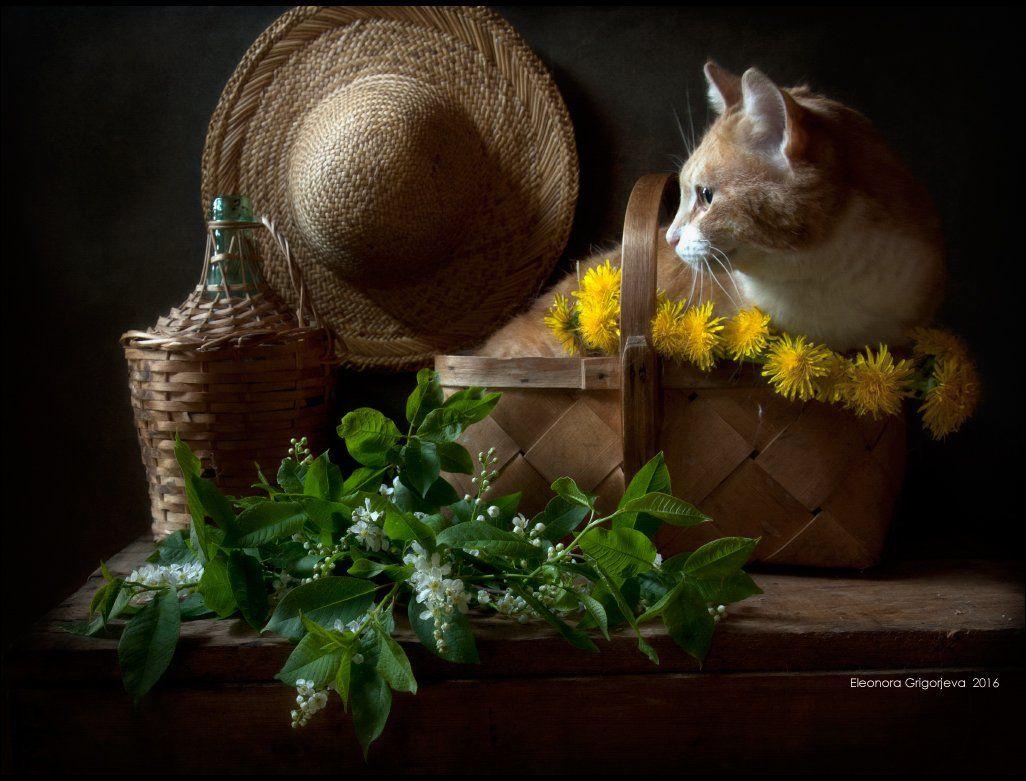 венок из одуванчиков, весна, корзина, натюркотики, одуванчики, рыжая кошка, свобода, соломенная шляпка, черёмуха, Eleonora Grigorjeva