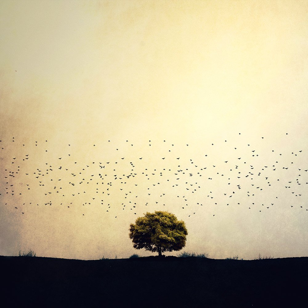 Creative, fineart, edit, tree, birds, landscape, conceptual, yellow, life, , Milad Safabakhsh
