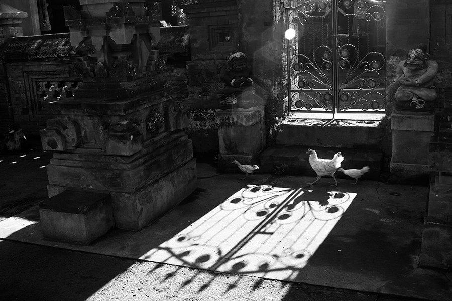 Bali, Chicken, Estet MF, Saratov, Shadows, Street, Бали, Жанр, Куры, Саратов, Тени, Улица, Estet MF