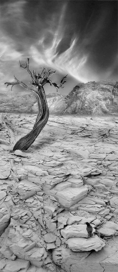 пустыня, пейзаж, дерево, жара, inflame