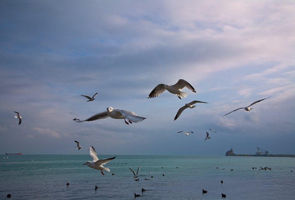 феодосия, порт,  чайки, tolyan139