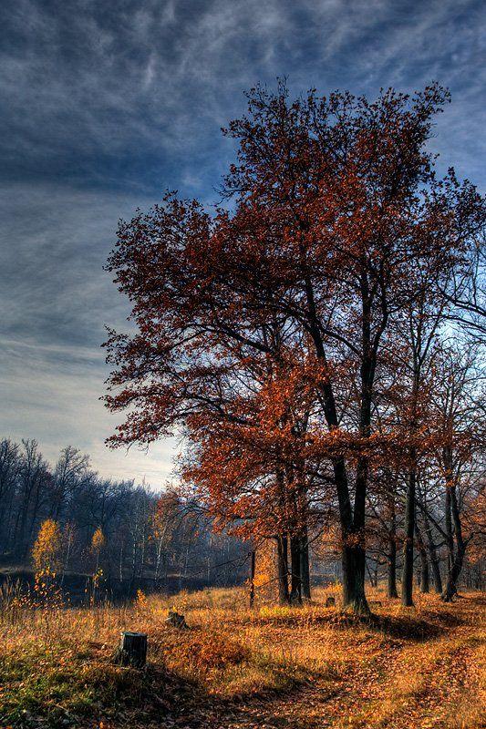 пейзаж, осень, дубовая роща, Адясов Алексей