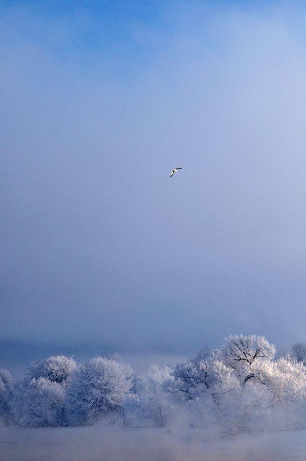 зима, мороз, река, иней, снег,  чайка, небо, синева, Динара