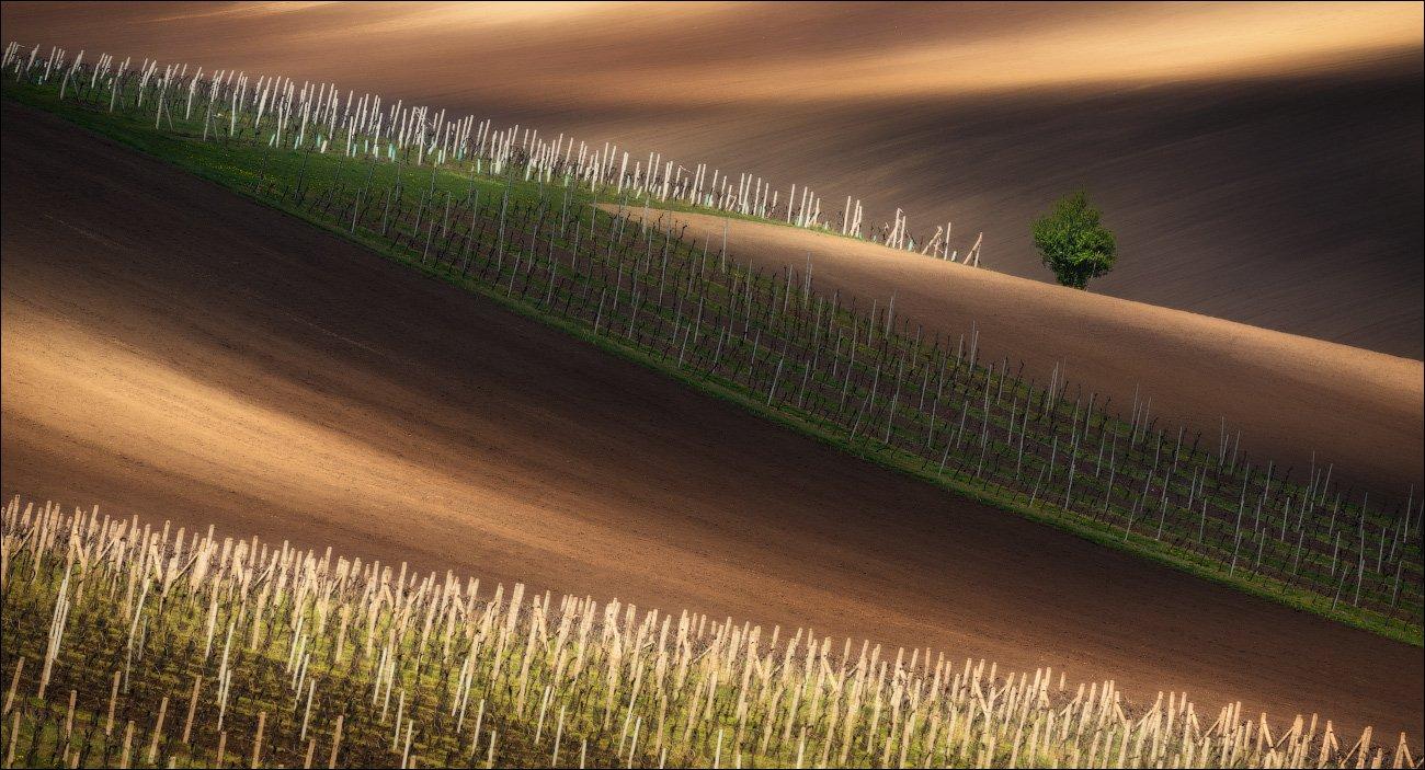 чехия, южная моравия, весна, вино, виноград, линии, свет, south moravian, czech republic, chiaroscuro, Влад Соколовский