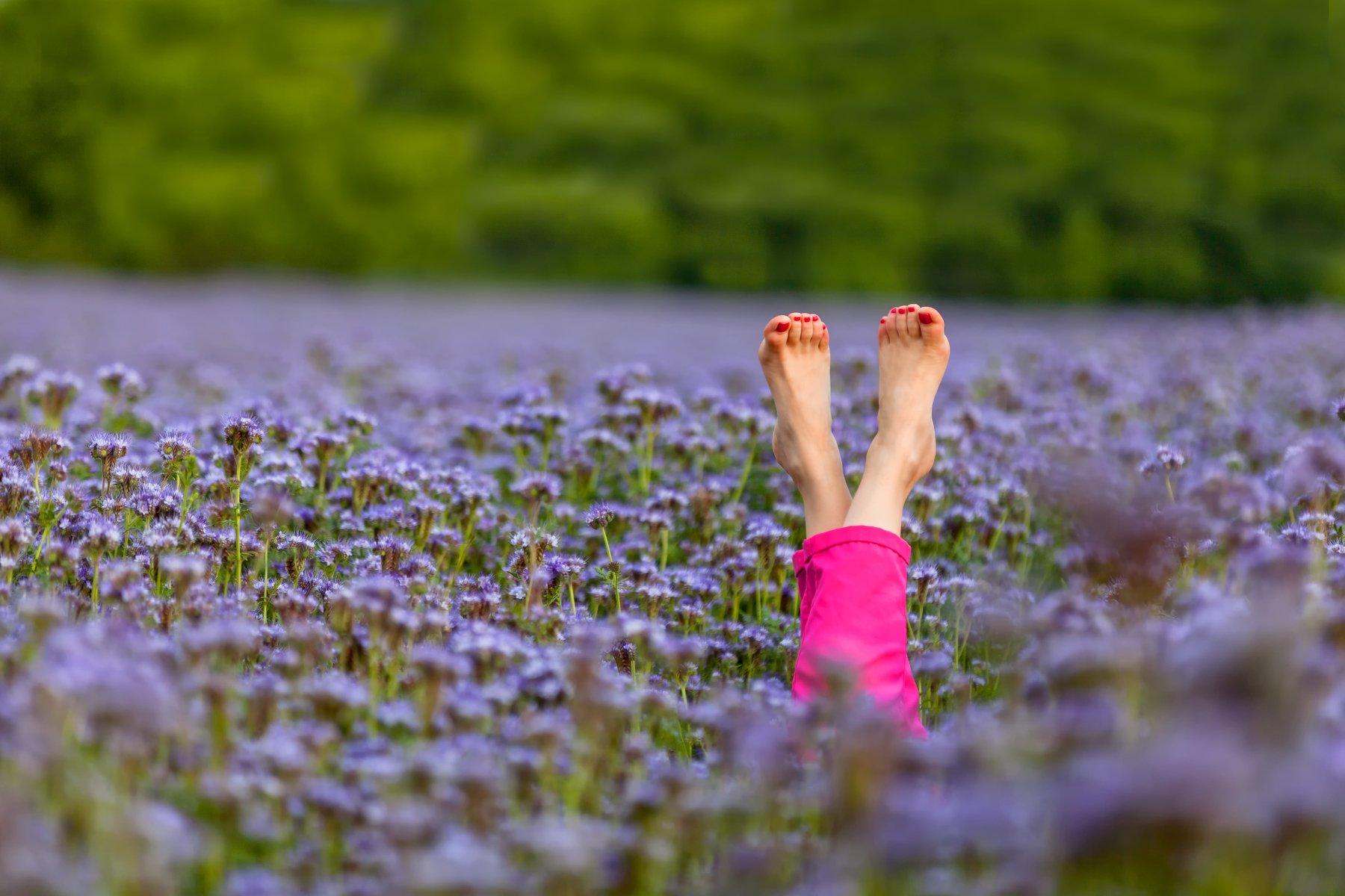 Лето, цветы, тепло, краски, радость, Никита Сердечный
