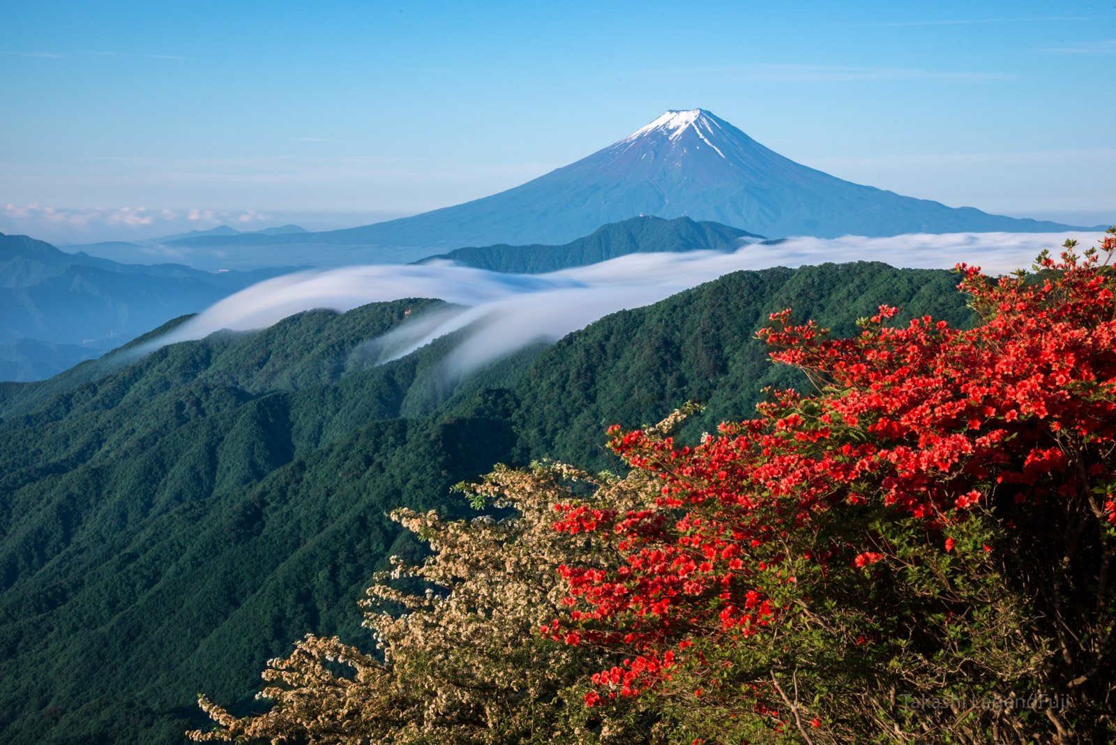 Fuji,mountain,Japan,azalea,flower,cloud,blue,red,white,, Takashi