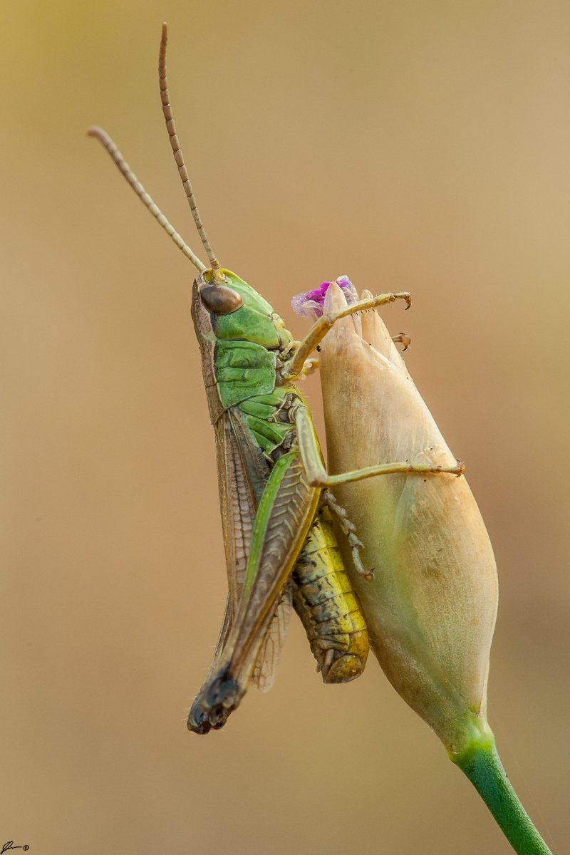 Insect, Macro, Makro, Nature, Wildlife, Mariusz Oparski