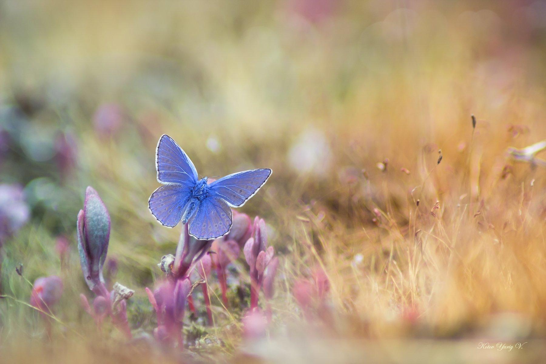 Бабочка, Крылья, Мох, Свет, Трава, Котов Юрий