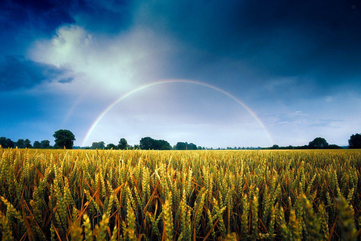 rainbow, nature, field, Wojciech Grzanka